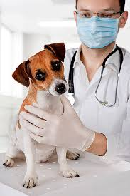 Dog Being Checked By Veterinarian