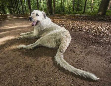 Worlds longest dog tail