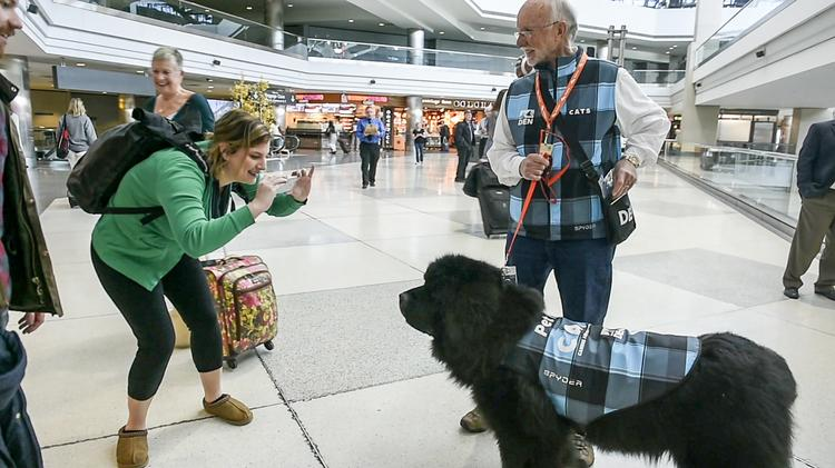 Dogs to de-stress airport travelers
