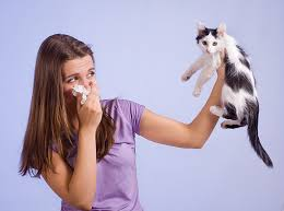 No more allergies