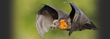 Bats are misunderstood