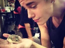 Justin Bieber's Hamster