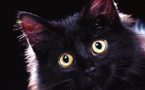One cool black cat