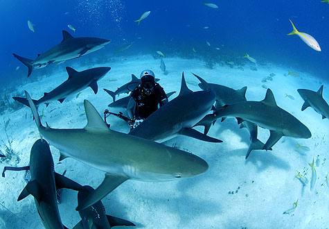 Brian Skerry Swins with  the Sharks and is on Animal Radio