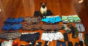 Cat that steals underwear