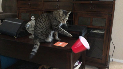 Cat knocking over cup