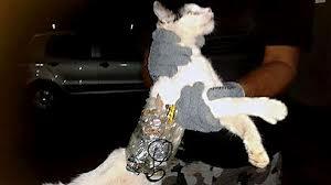 Cat Contraband