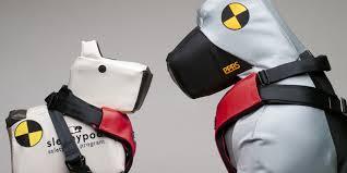 Crash Test Dogs