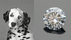 Make your pets cremains into a diamond.