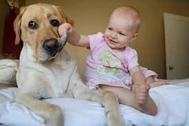 Introducing Dog to Baby on Animal Radio®