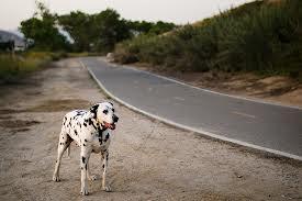 Dog cleared