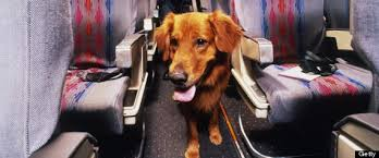 Frequent Flyer Miles for Fido