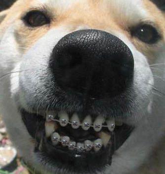 Doggy Braces