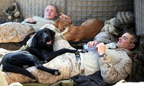 Dogs and Soldiers