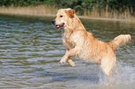 Should your dog swim in lakes