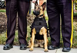 Dog Vests