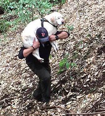 Fireman saves blind dog
