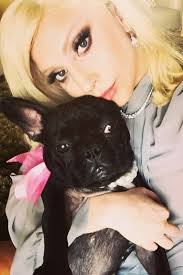 Lady Gaga Pet Line