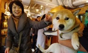 Japan Pet Rental