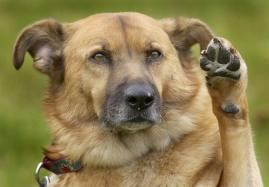 Left Pawed Dog