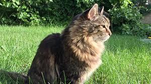 Oldest Living Cat