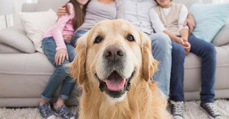 Alaska considers pet custody