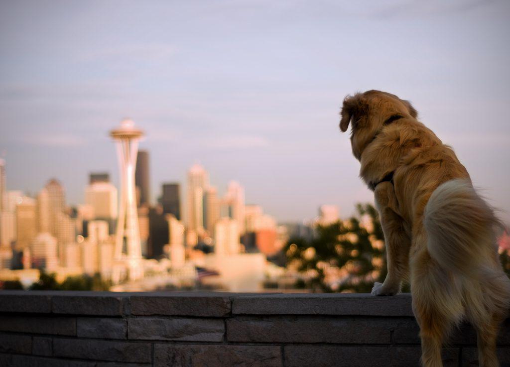 Pet Friendliest Cities