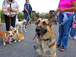 Pet Events on Animal Radio®