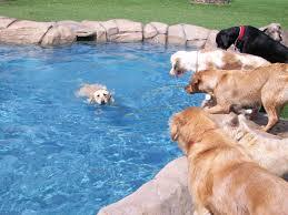 Pet Resort