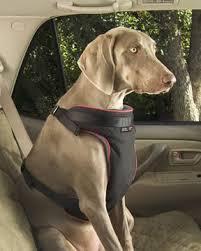 No safe pet seat