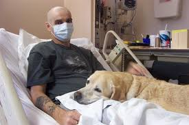 Pets in the hospital