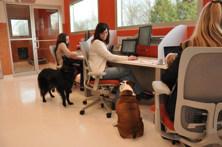 Best pet friendly companies