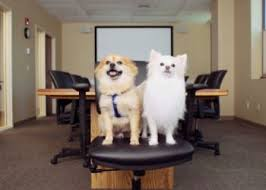 Employers offer Pet Insurance Perks