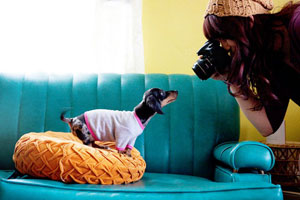 Photographing your pet