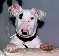 Pet Piercing Ban on Animal Radio®