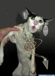 No more pierced cats