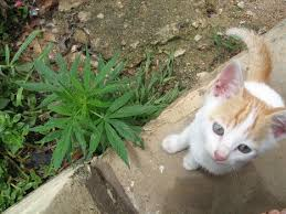 Medical Marijuana for our Pets