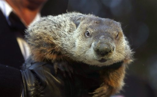 Punxsutawney Phil in legal trouble