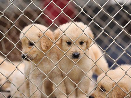 NY Upholds Restrictions on Pet Sales