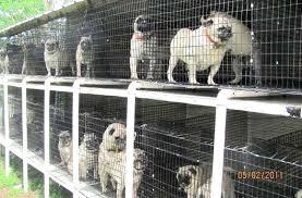 No to Puppy Mills