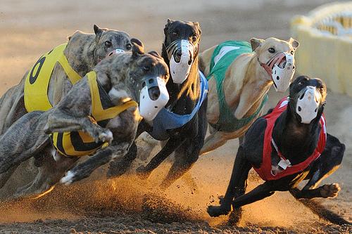 Greyhounds on Cocaine