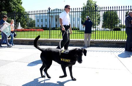 Secret Service Dogs Revealed on Animal Radio