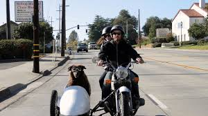 Side Car Dogs