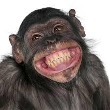 Monkeys smarter than Duke University students