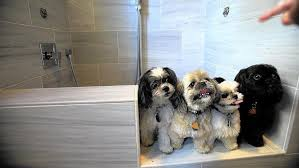 Pet Friendly Housing on Animal Radio®