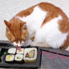 Sushi for your cat?