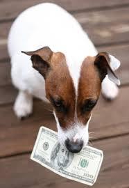 A NEW pet tax deduction
