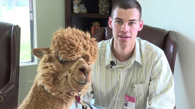 Therapy Alpacas….really.
