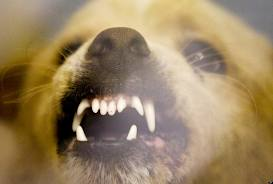 Vicious Dog Registry