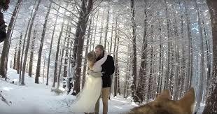 Dog films wedding video